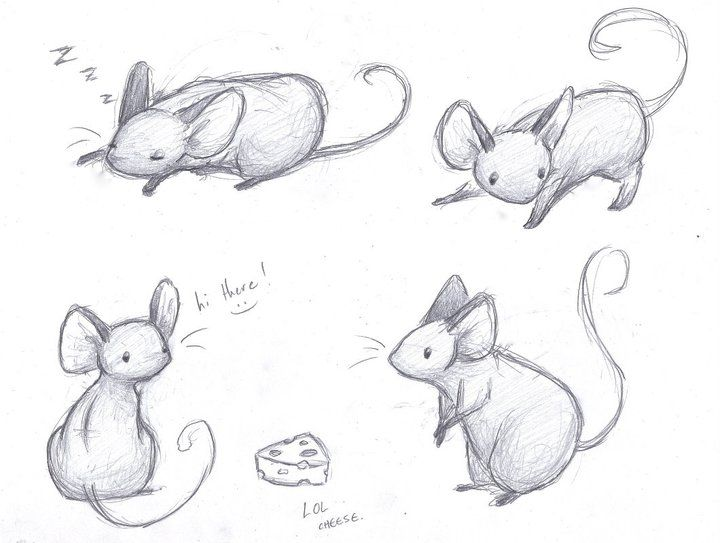 Drawn rodent sketch On sleighbelles ideas Sketches on