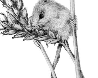 Drawn rodent field mouse Mouse Etsy Field drawings Greeting