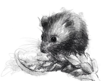 Drawn rodent field mouse Mouse from original fine print
