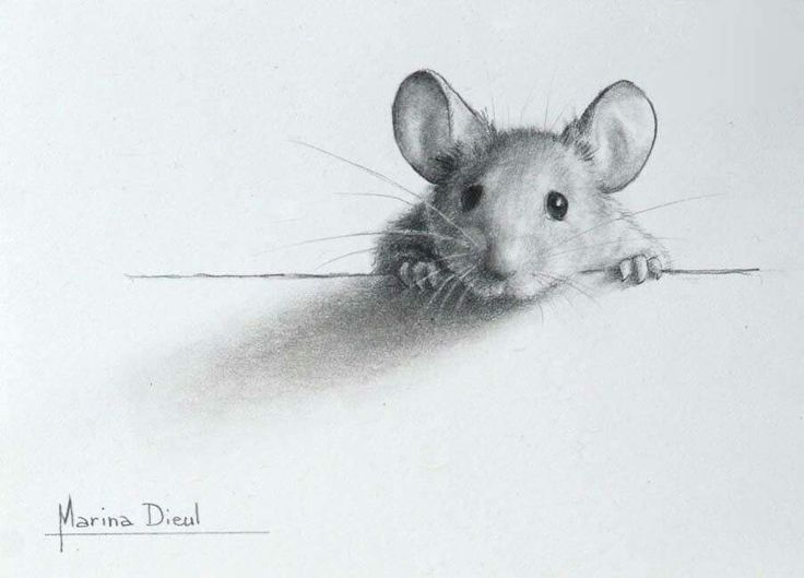 Drawn rodent sad Souris illustration ideas 25+ Pinterest