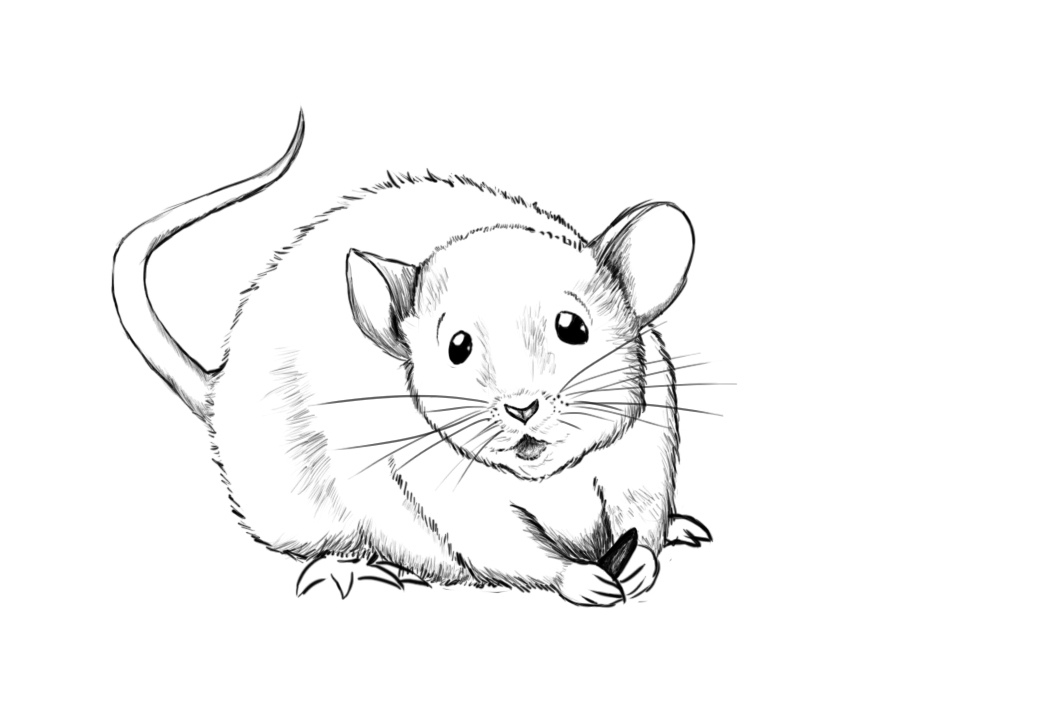 Drawn rodent mouse line A just added to mouse