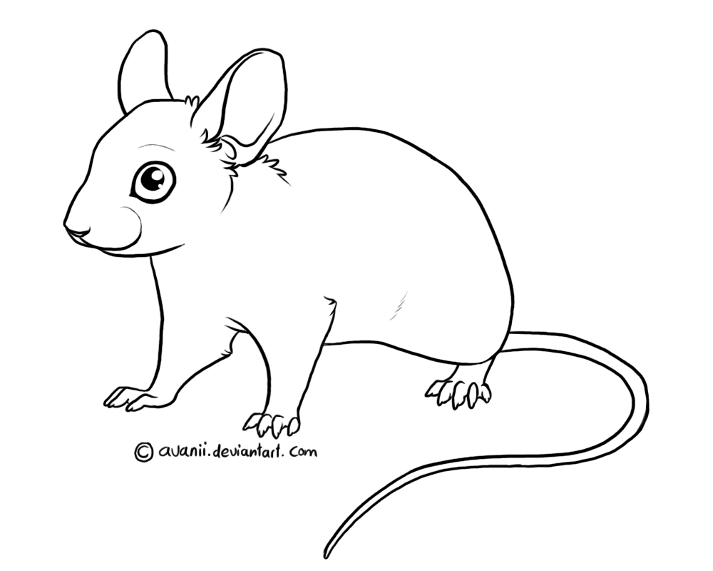 Drawn rodent mouse line A To photo#18 How to