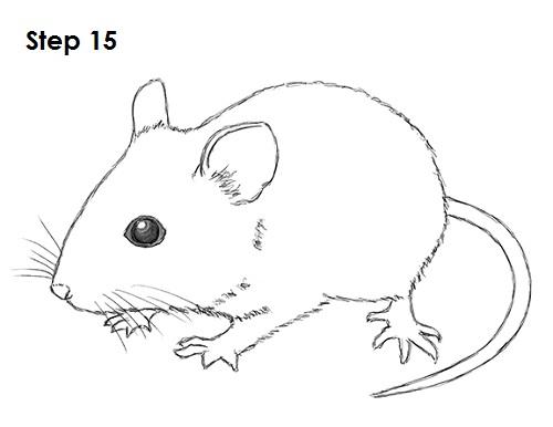 Drawn rodent mouse line Burns Pinterest Robert http://www how2drawanimals