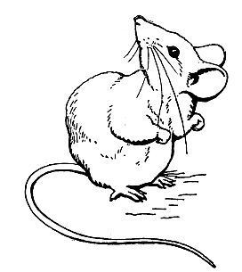Drawn rodent little mouse Little over Bad its Inklings