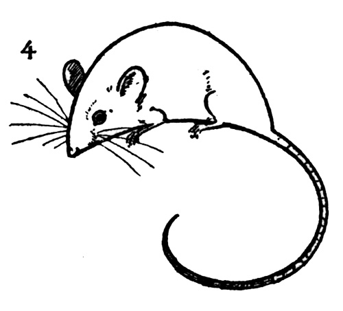 Drawn rodent little mouse Click Enlarge Draw Vintage Fairy