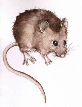 Drawn rodent little mouse The Thursday I mice do