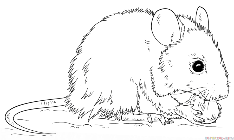 Drawn rat mouse head Mouse to a tutorials to