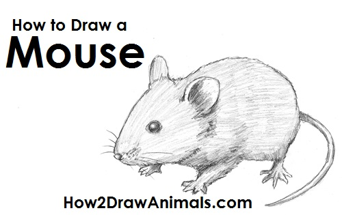 Drawn rodent lion A How Draw Mouse Draw