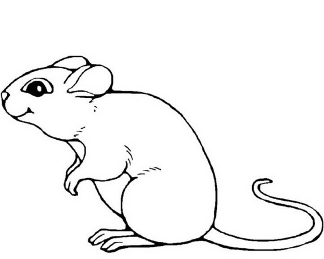 Drawn rodent mouse line « animal mouse Click this