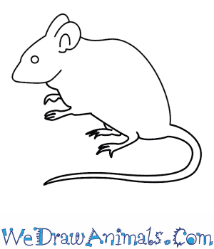 Drawn rodent step by step How To Mouse A
