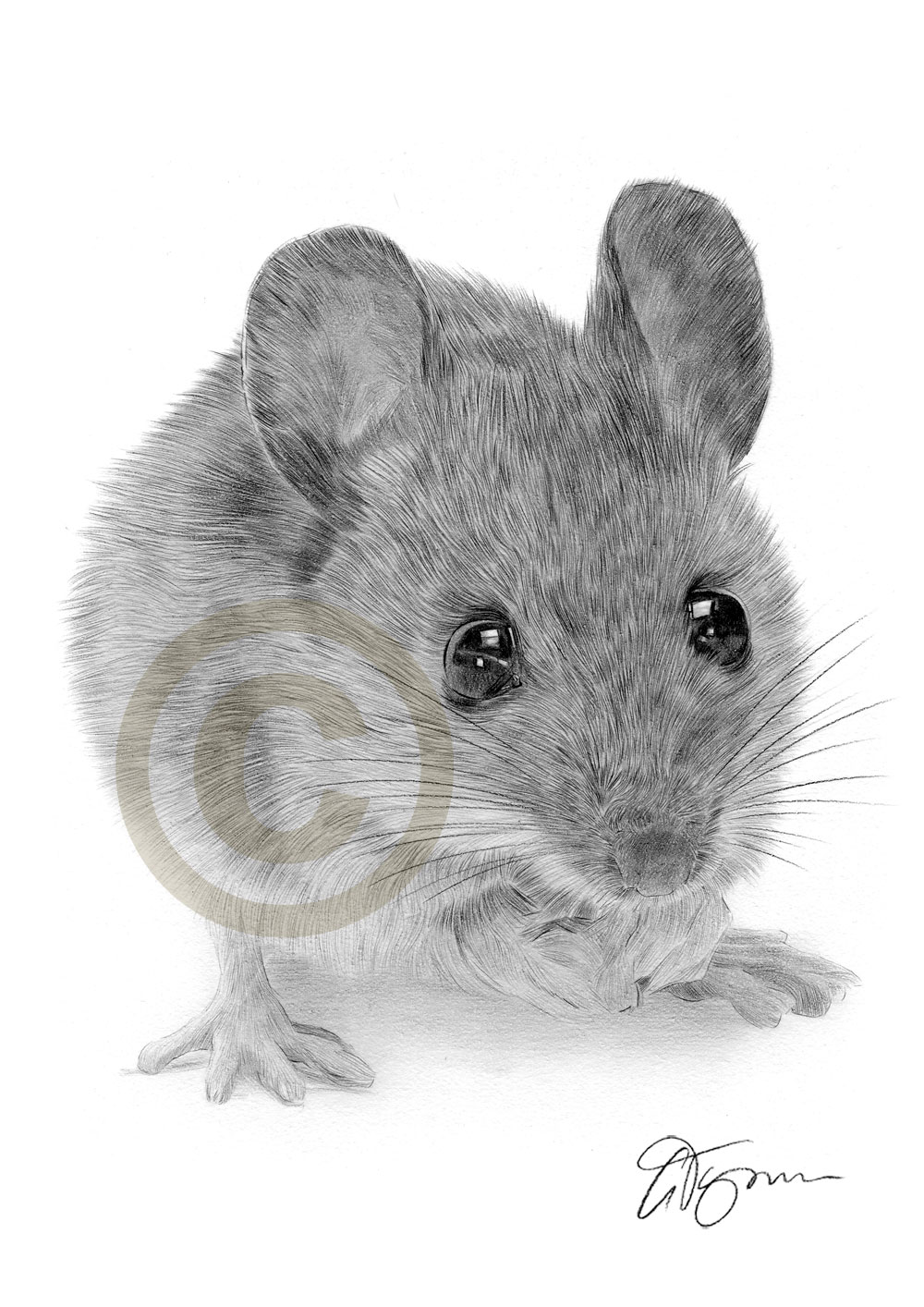 Drawn rodent pencil drawing Search AnimalsAnimal realistic mouse DrawingsPencil