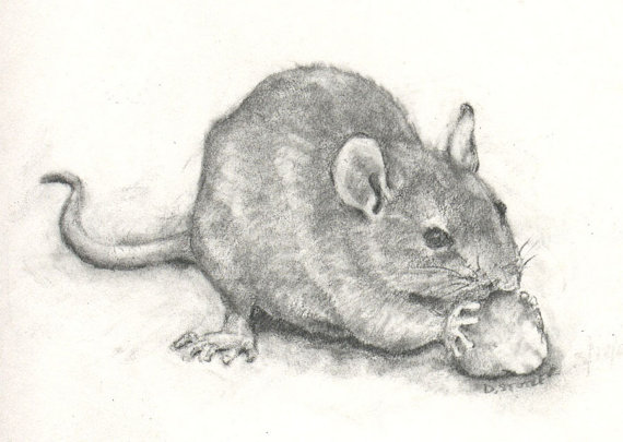 Drawn rat grey Gerbil Nibbler  Mouse charcoal