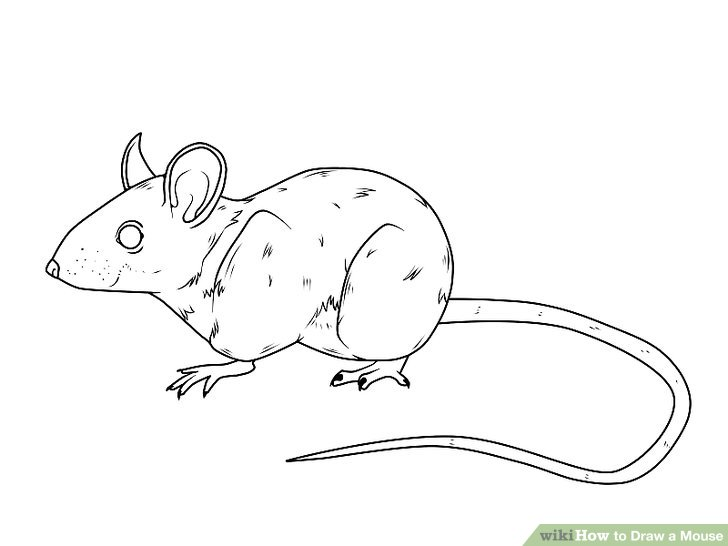 Drawn rodent step by step 14 3 titled to Draw