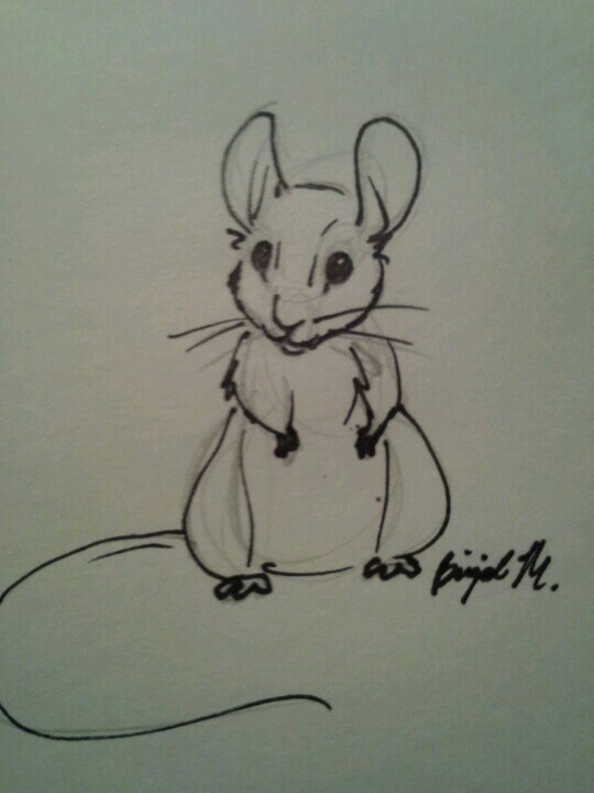 Drawn rodent sketch On by DrawingsRodentsDrawing Drawings Ideas