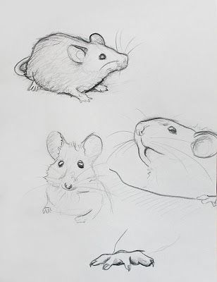 Drawn rodent love RATS Pinterest Find more SKETCHES