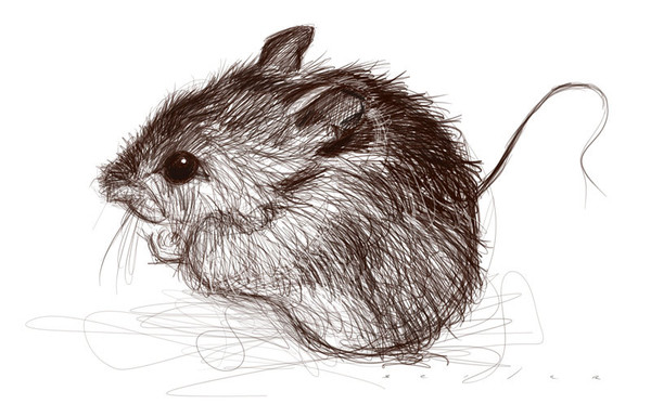 Drawn rodent pencil drawing Watercolor via & Find by