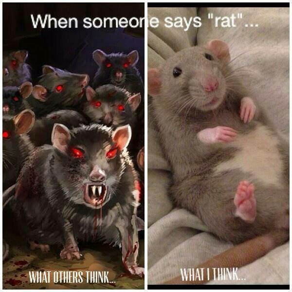 Drawn rodent the house meme More on and girls this