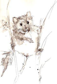 Drawn rodent watercolour Watercolor pen wash & Maggie