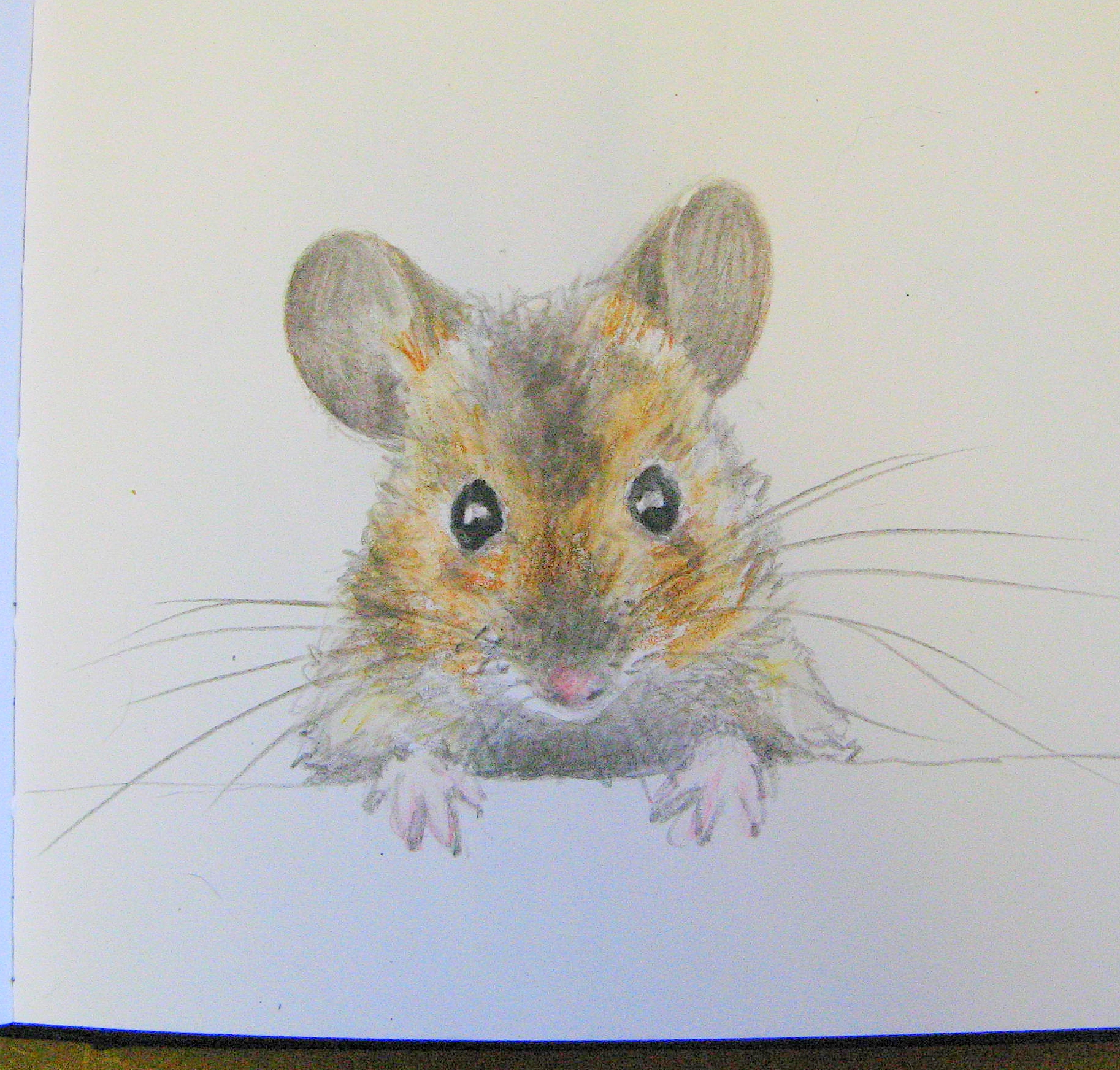 Drawn rodent vintage garden Drawing woodmouse agnesandcora mouse 2