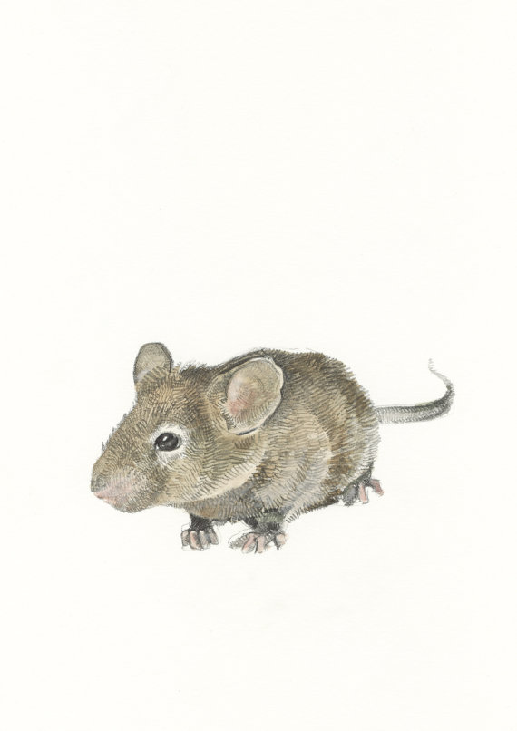 Drawn rodent field mouse To similar similar Field Mouse