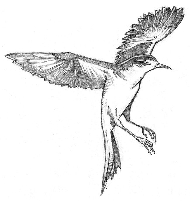 Drawn mockingbird Paintbrush) (holding mocking ink bird
