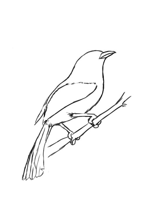 Drawn mockingbird To  Bird Draw A
