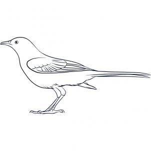 Drawn mockingbird Draw How Draw 6 How