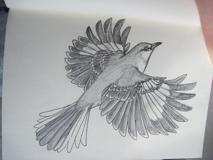 Drawn mockingbird 25+ Mockingbird ideas on tattoo