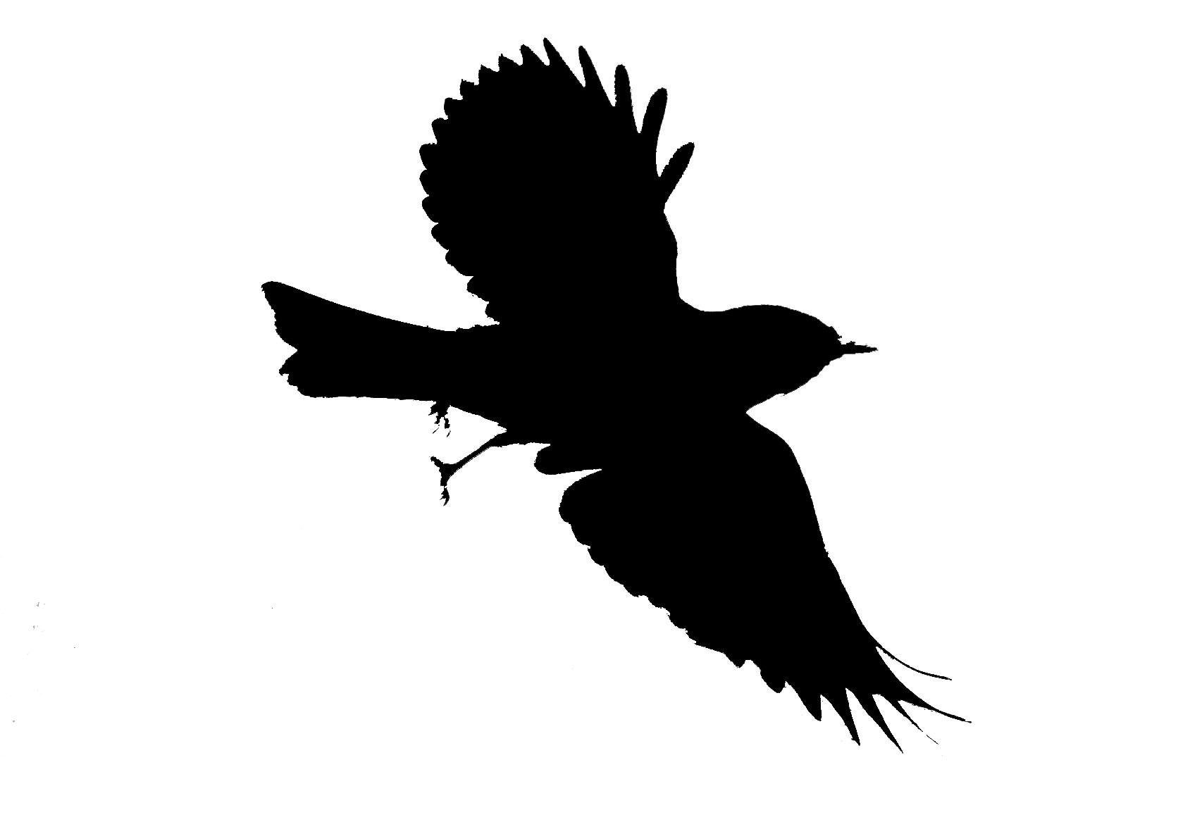 Blackbird clipart mockingbird Clipart Free mockingbird%20clipart Images Mockingbird