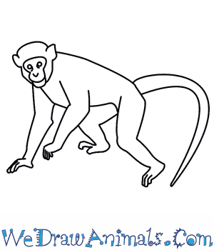 Drawn spider money  A Monkey How To