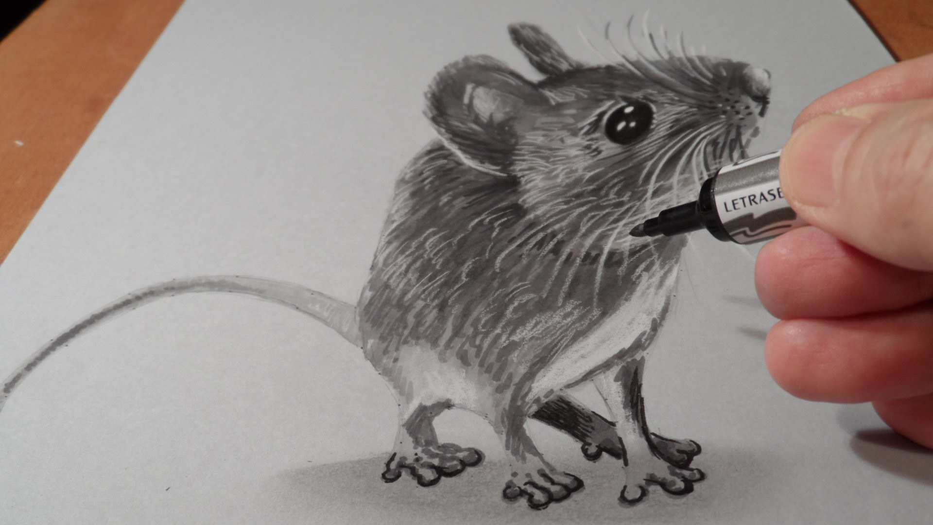 Drawn rodent pencil drawing Mouse Trick How YouTube Art