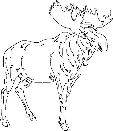 Drawn moose Moose moose Moose Pinterest how