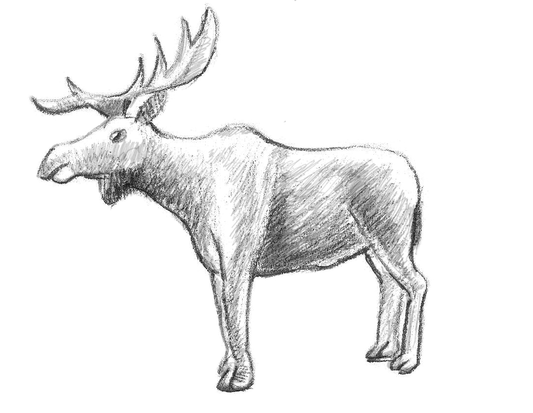 Drawn moose To How Draw This Moose