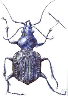 Drawn bug artistic Fly in of ballpoint insect