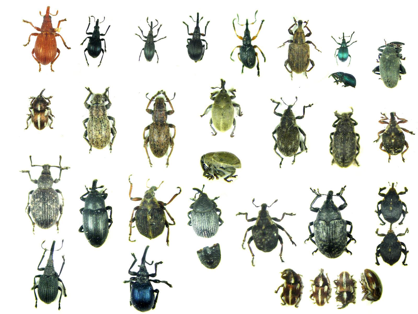 Drawn bugs termite Drawing Blog TermiteTreatment Urban Bugs