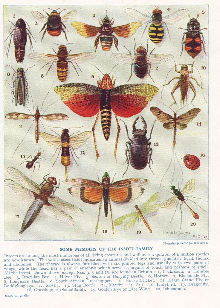 Drawn bugs natural history History illustration chart on images