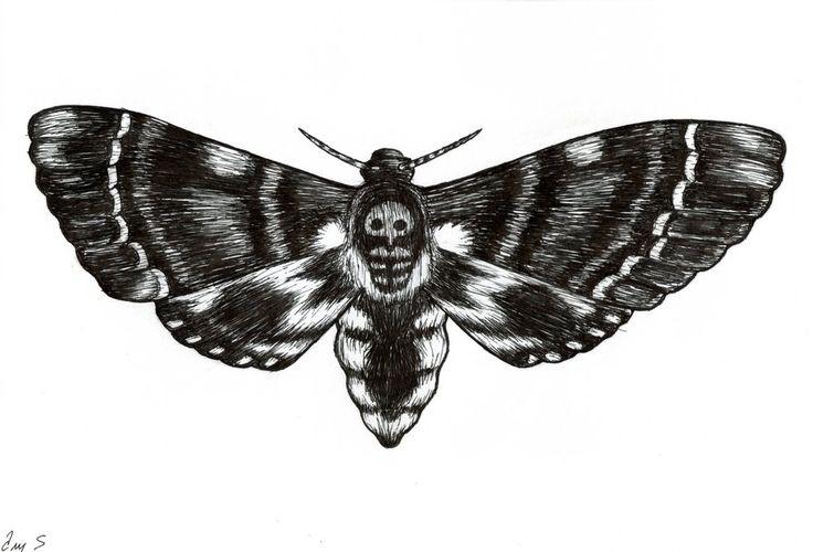 Drawn moth Photo#11 Deaths Drawing head Moth