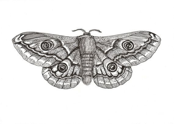 Drawn moth Best 7 Pinterest Lesser paper