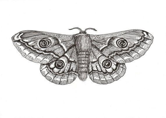 Drawn moth Best 7 Pinterest Lesser paper