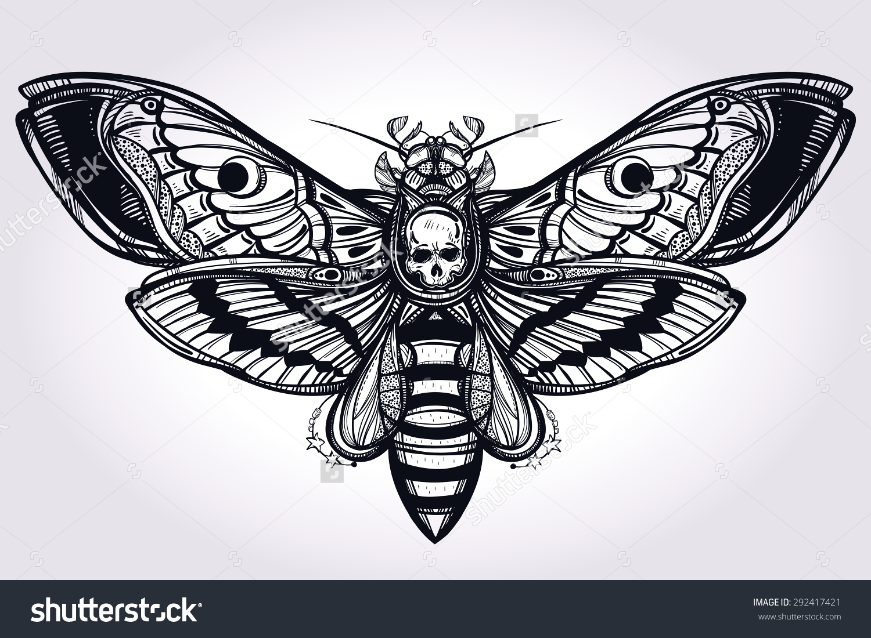 Drawn moth Best drawn on Deaths Isolated