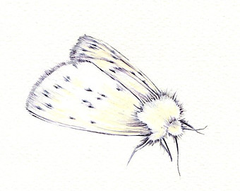 Drawn moth An White Moth Etsy drawing