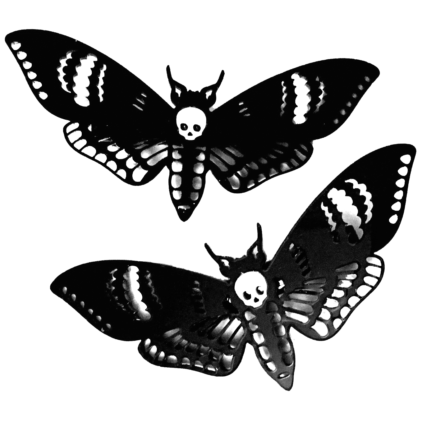 Drawn moth Pair Deaths Clips Curiology Curiology