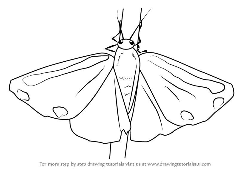 Drawn moth simple Simple Moth Drawing drawing photo#8