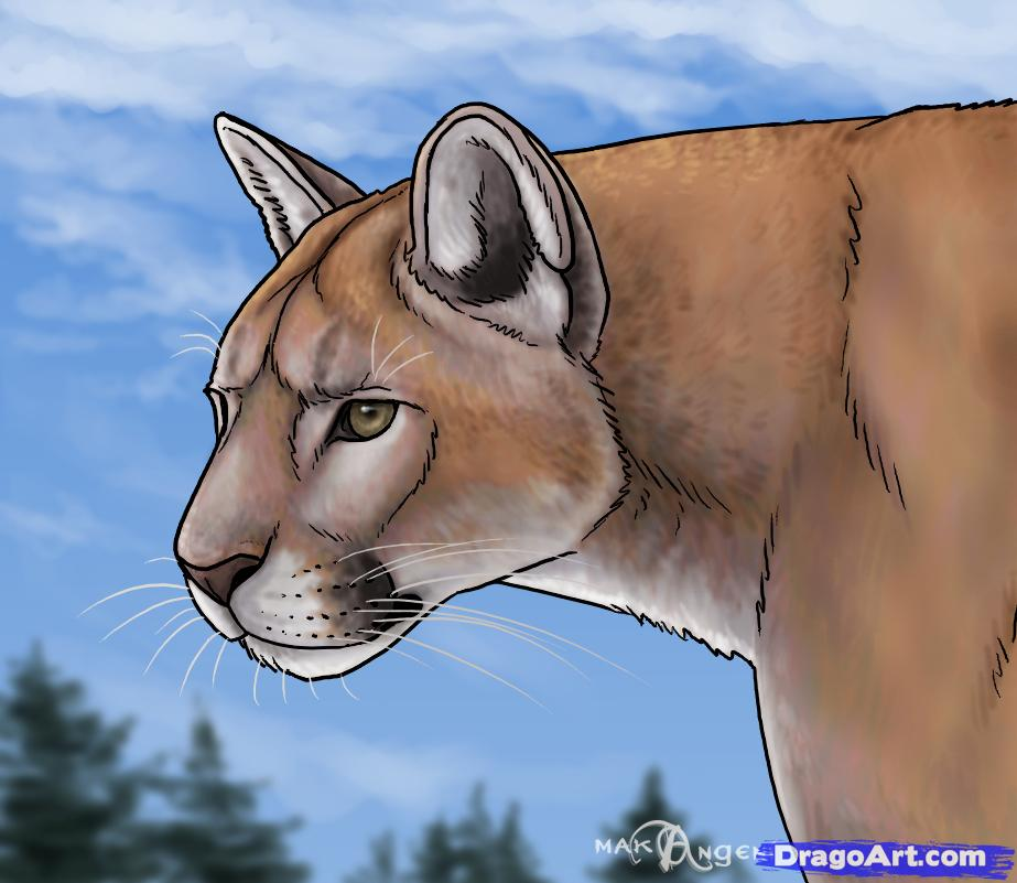Drawn mountain mountain line By forest cougars to Lion