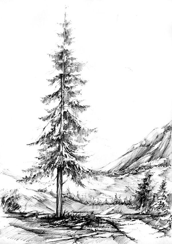 Drawn fir tree realistic Ideas 25+ Find Drawing art