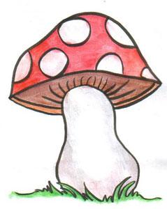 Drawn mushroom A mushrooms drawing: once a