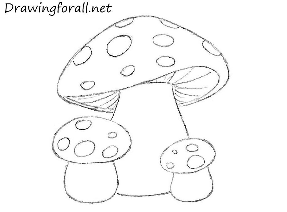 Drawn mushroom Kids Mushrooms how How for