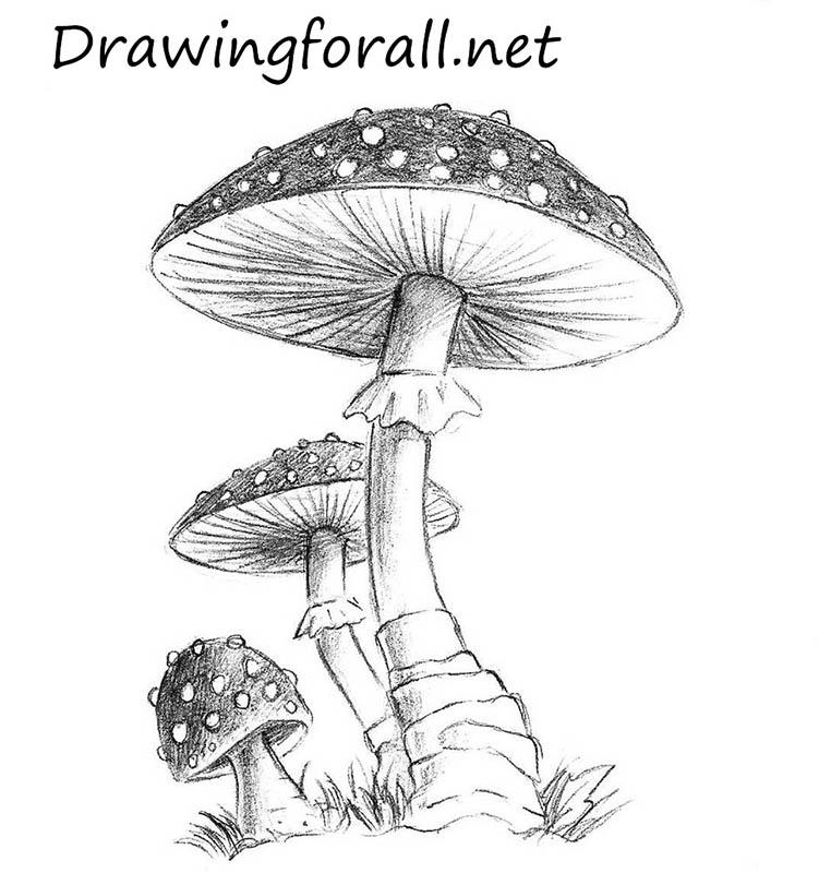 Drawn mushroom A mushroom Mushroom to drawing