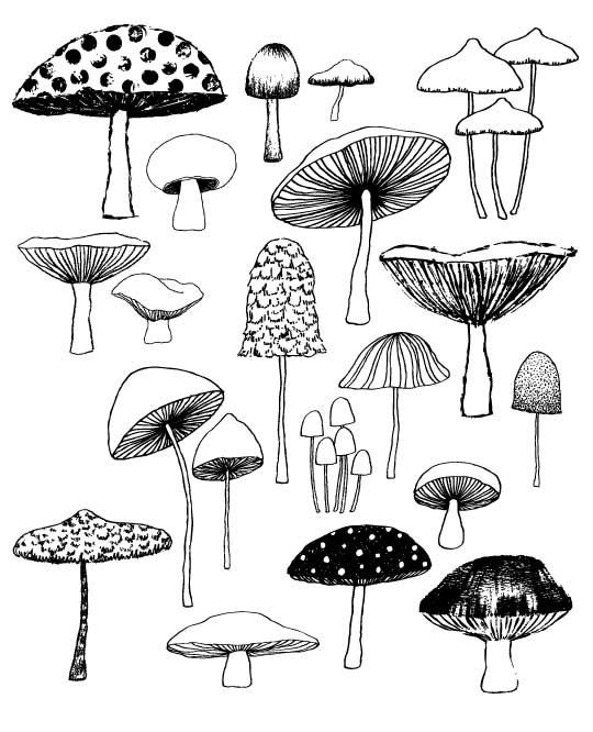 Drawn mushroom By on Best Mushrooms EloiseRenouf