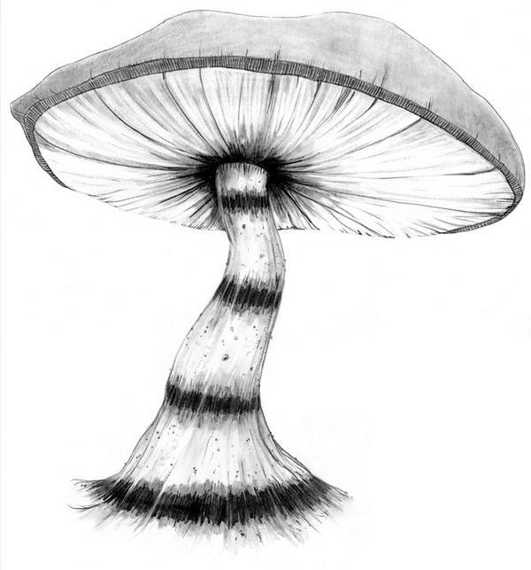 Drawn mushroom alice in wonderland mushroom > Mushroom Deep  Gallery